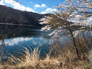 西湖とソメイヨシノ。バスに乗っている間はすっかり観光客状態です